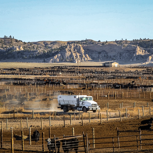 Truck in feedlot